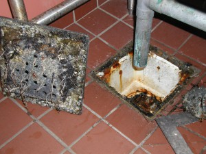 Dirty floor drains in food service areas are public enemy number two!  They feed flies, ants and cockroaches, and can harbor harmful bacteria and fungi.
